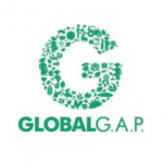 GlobalGAP certified bananas.