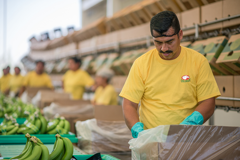 Celebrating 54 Years of High Quality Mexican Grown Bananas