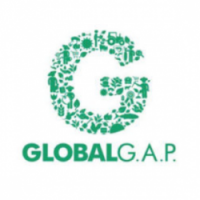 Mibio bananas are GlobalGAP certified.