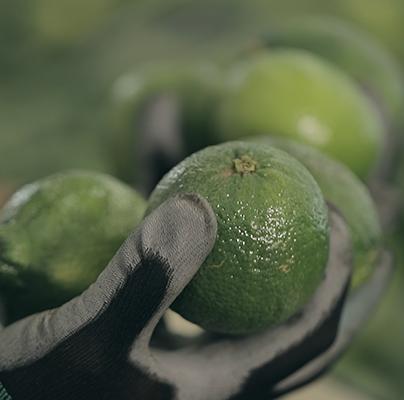 Exotifruit